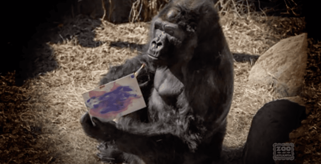 Ivan the Gorilla Paintings [Source: Zoo Atlanta via YouTube]