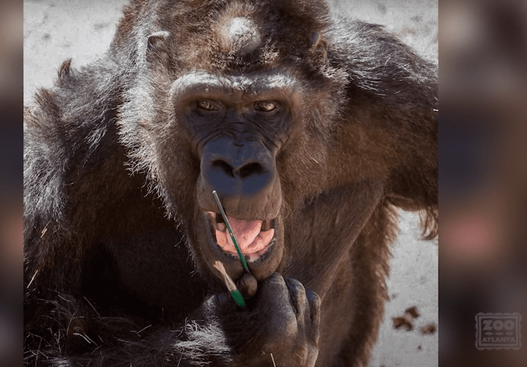 Ivan the Gorilla with Paint Brushes [Source: Zoo Atlanta via YouTube]