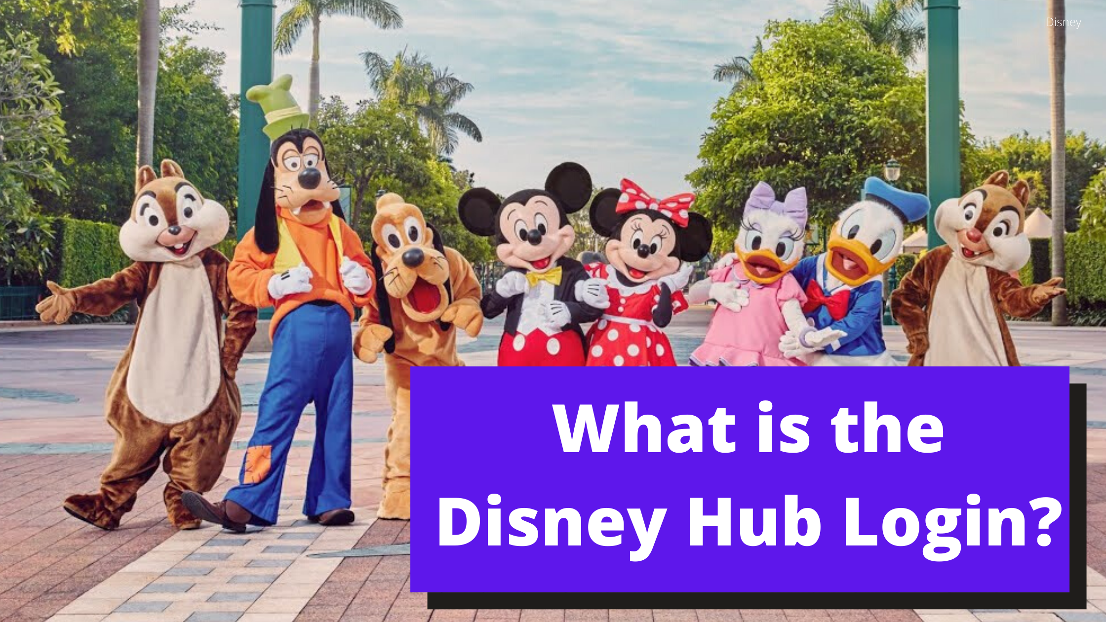 What Is the Disney Hub Login and Sign In Website Page?