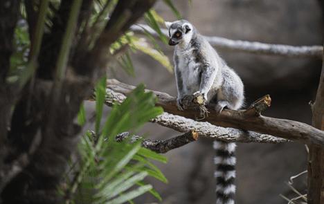 Disney World Discovery Island Animals [Source: Disney]